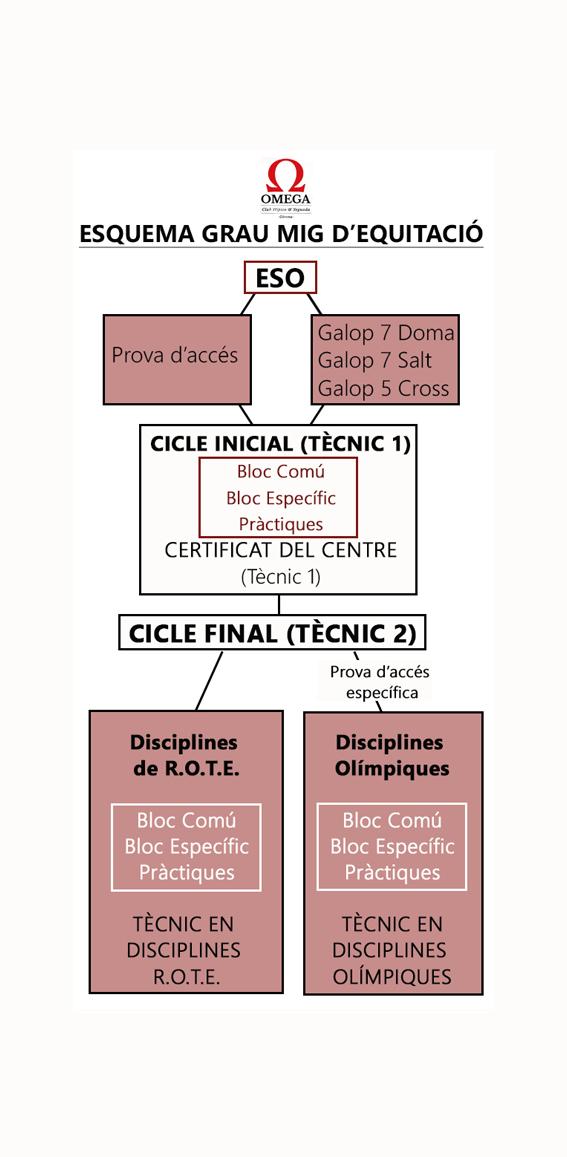 esquema tecnicos web
